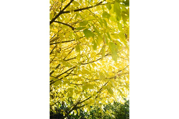 The Best Trees For Autumn Colour Gardens Illustrated