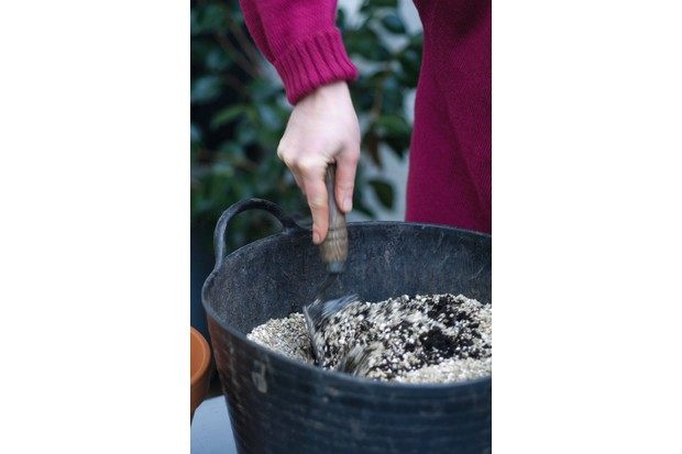 Alys' tips on growing hippeastrum include using grit or sand to improve drainage in your potting compost.