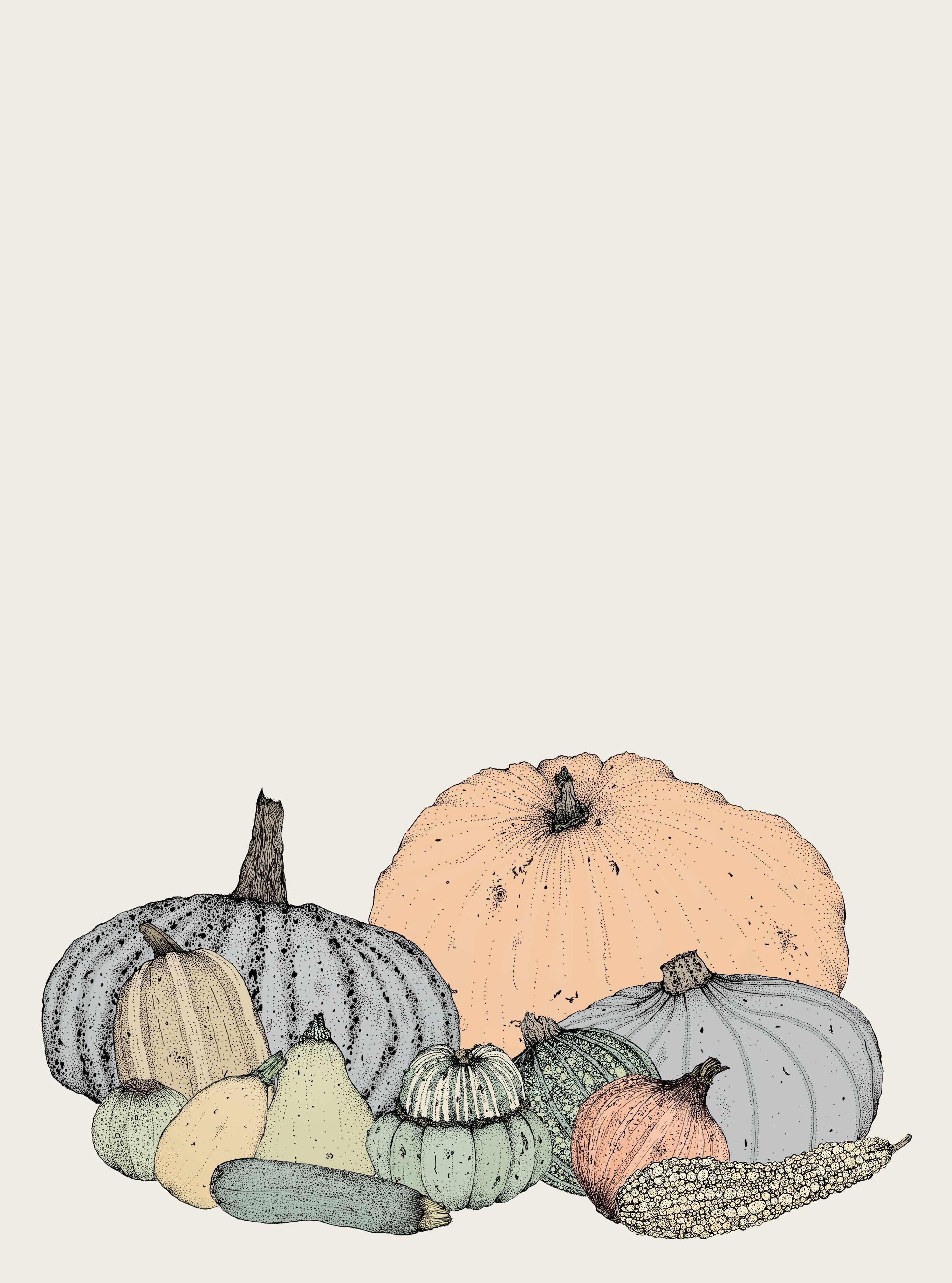 Pumpkins, courgettes and winter squash illustrated by artist Kerry Lemon.