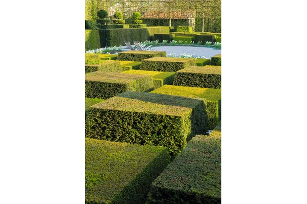 Contemporary topiary garden featuring large rectangles of box
