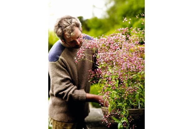 Matthew Reese tends to pink gysophila planted arrangement
