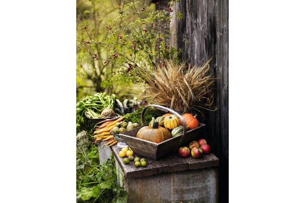 Michaelmas harvest exchange