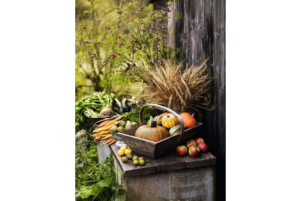 Michaelmas harvest exchange