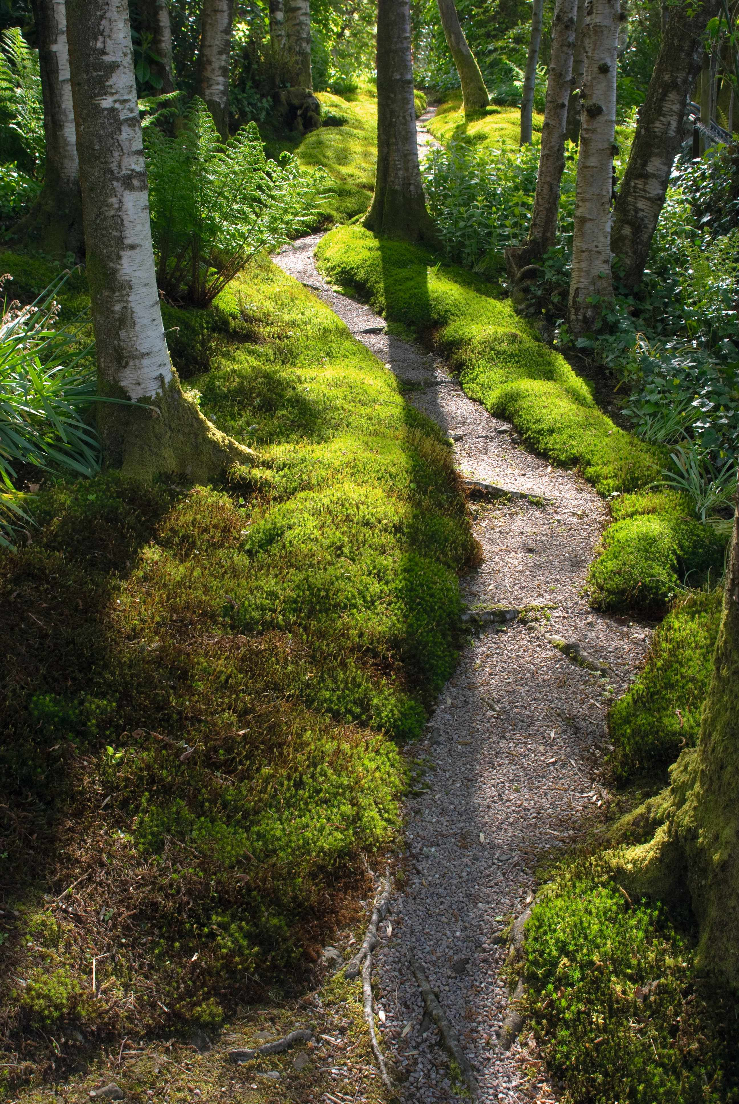 shade-loving mosses, ferns and lichens