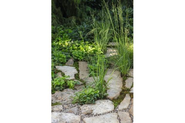 Shade loving ground cover Cornus
