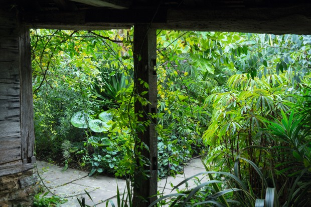Eye catching foliage at the Great Dixter's Exotic Garden