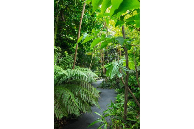 An urban garden pathway with exotic plants and large green leaves