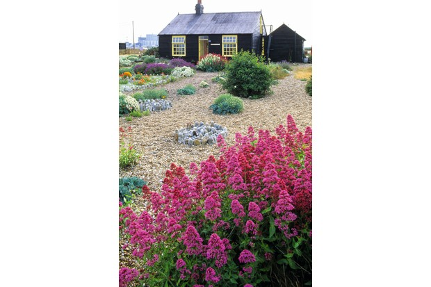 A shingle front garden with a small cottage in the background
