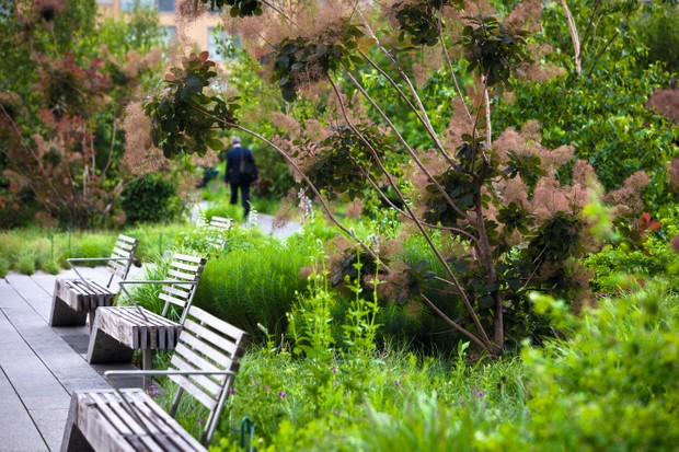 The High Line Garden in New York by Piet Oudolf features luscious green trees and wooden benches lining a path.