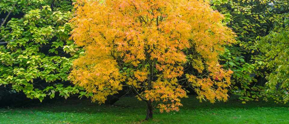 The Best Trees For Front Gardens Gardens Illustrated