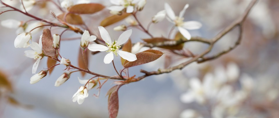 Hardy Woody Plants That Will Grow In A Cold And Tough Climate