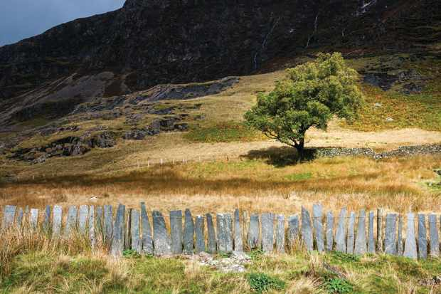 Slate fencing at Plascwmllan beside the Watkin path in Snowdonia, North Wales.