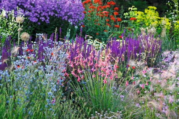 A colourful mix border at Maverleys in Hampshire is filled with planting of purples, blues and pinks