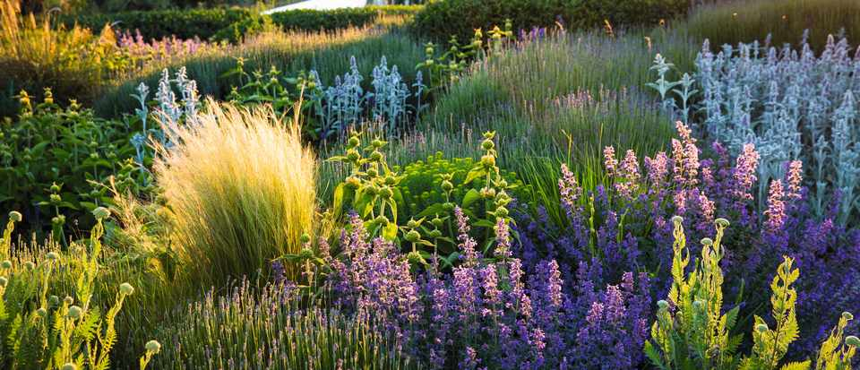 How to plan a dry garden plus plant combinations - Gardens