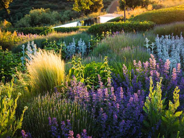 How To Plan A Dry Garden Plus Plant Combinations Gardens Illustrated