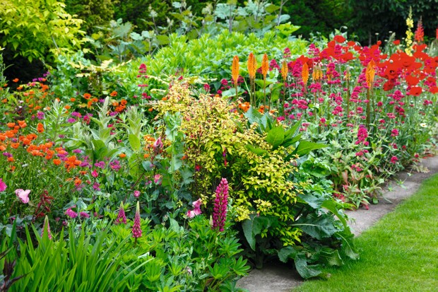 A vibrant clash of the hot colours of yellow, oranges, pinks and red make up a flowering border of tone and depth