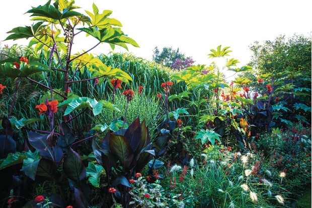 An exotic plant with tropical-like leaves fills the border of an experimental research garden in Germany.