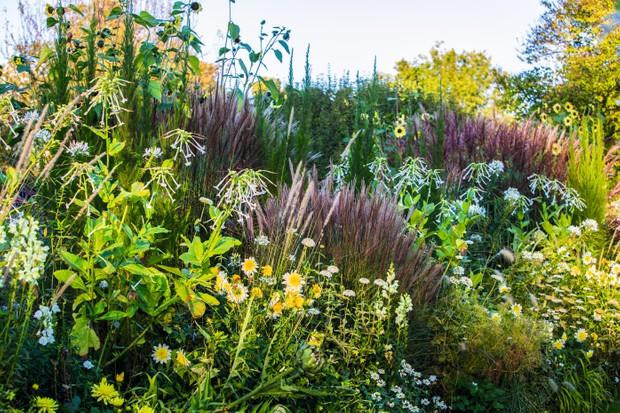 Perennials to the fore