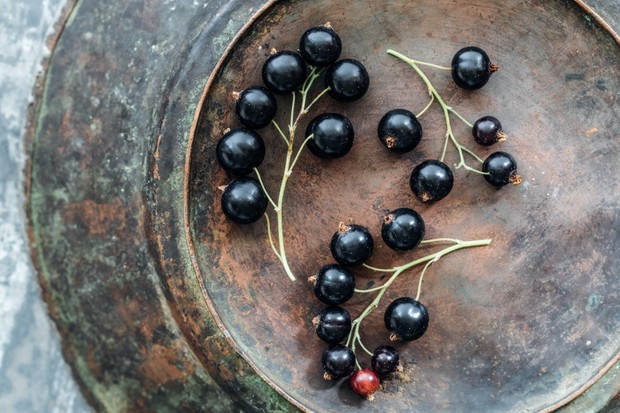 Still life portrait of fresh blackcurrants arranged on an antique metal plate with beautiful patina