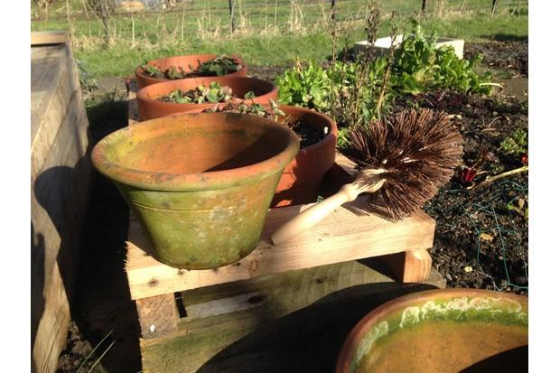 Flower pot brush.Photo: Oxford Brush Company