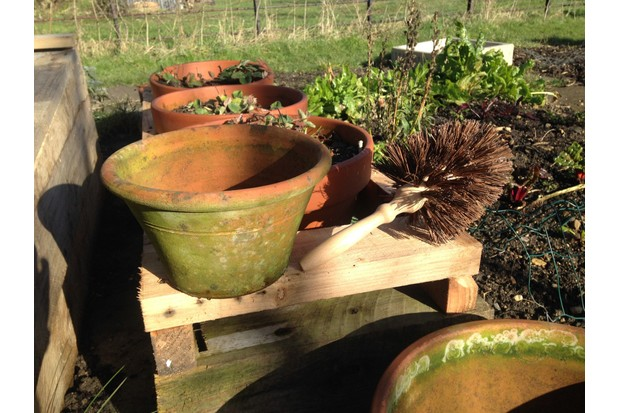 Flower pot brush.Photo: Oxford Brush Company