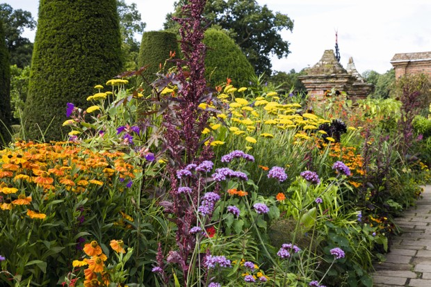 Contemporary planting in bright oranges, yellows and purples sit alongside historic topiary at Packwood House gardens
