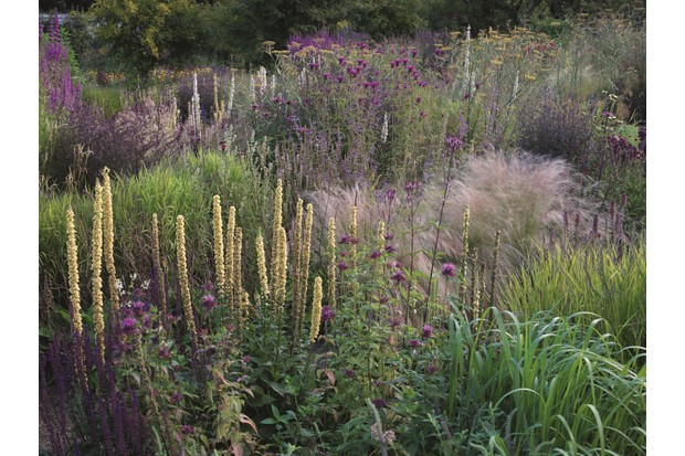 A planted naturalistic display of rare and interesting perennials in soft purple hues is on display in the enchanting Cambo Walled Garden