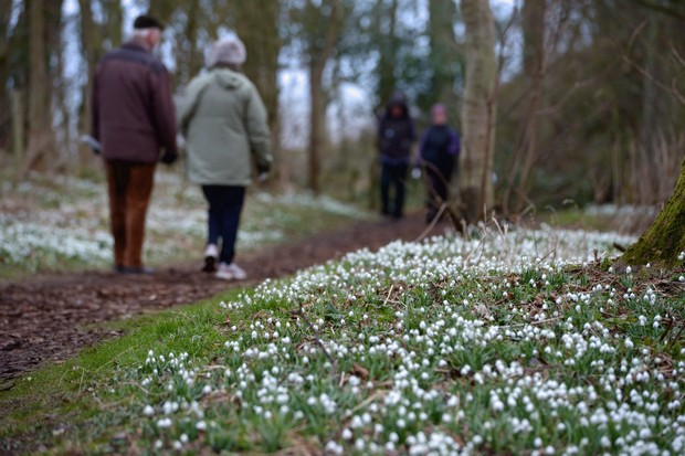 People walk past snowdrops coming into bloom in the grounds of Cambo House in St Andrews, Scotland. The estate is open daily for visitors to enjoy the woodland walks and to view over 300 varieties of snowdrops.