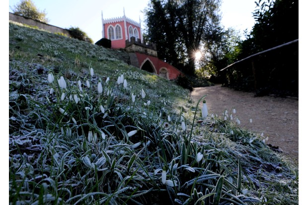 Snowdrops at Rococo Gardens in January. Photo: Paul Nicholls / Barcroft Media / Barcroft Media via Getty Images