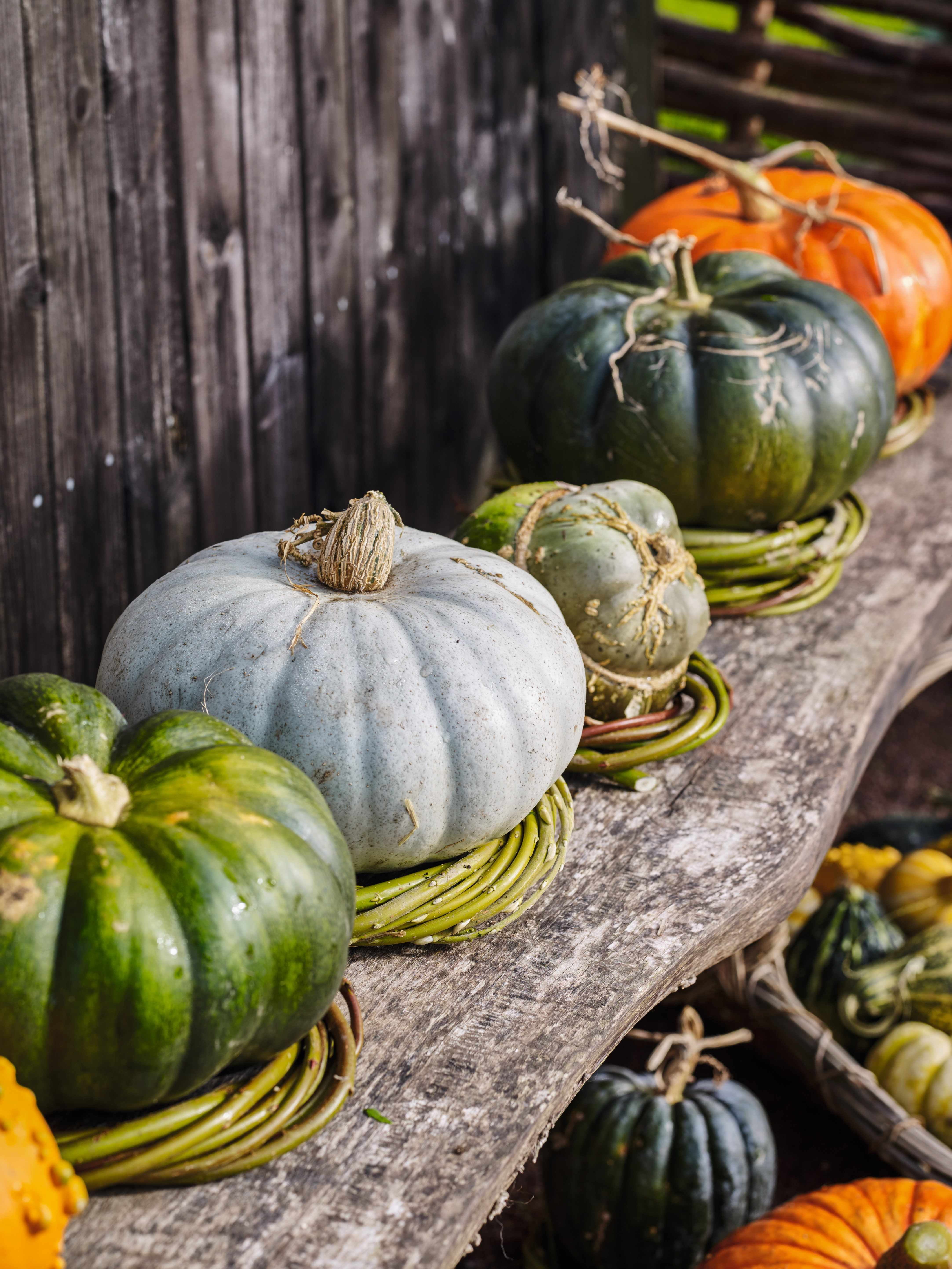 Natural support for pumpkins