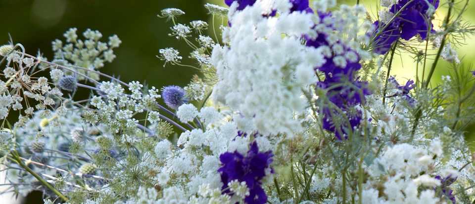 Fiona Electric Daisy Flower Farm. Photo: Britt Willouby Dyer