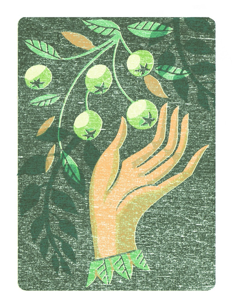 Illustration of a hand picking gooseberries