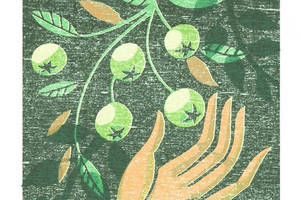 Illustration of a hand picking gooseberries