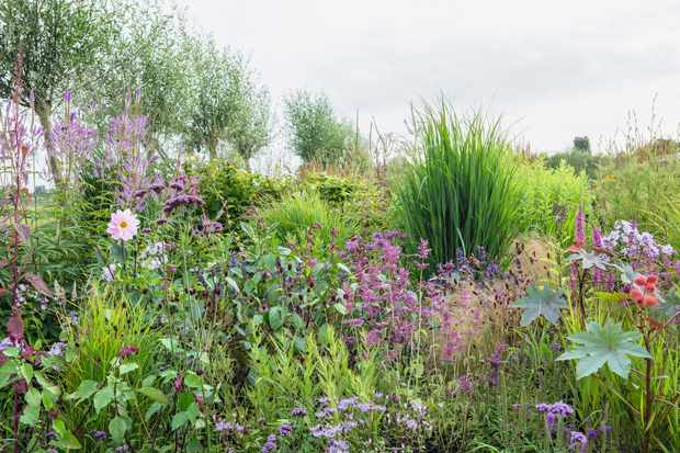 Similar shades of purple plants of different heights create movement in this planted border
