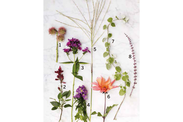 late-season plants for container garden
