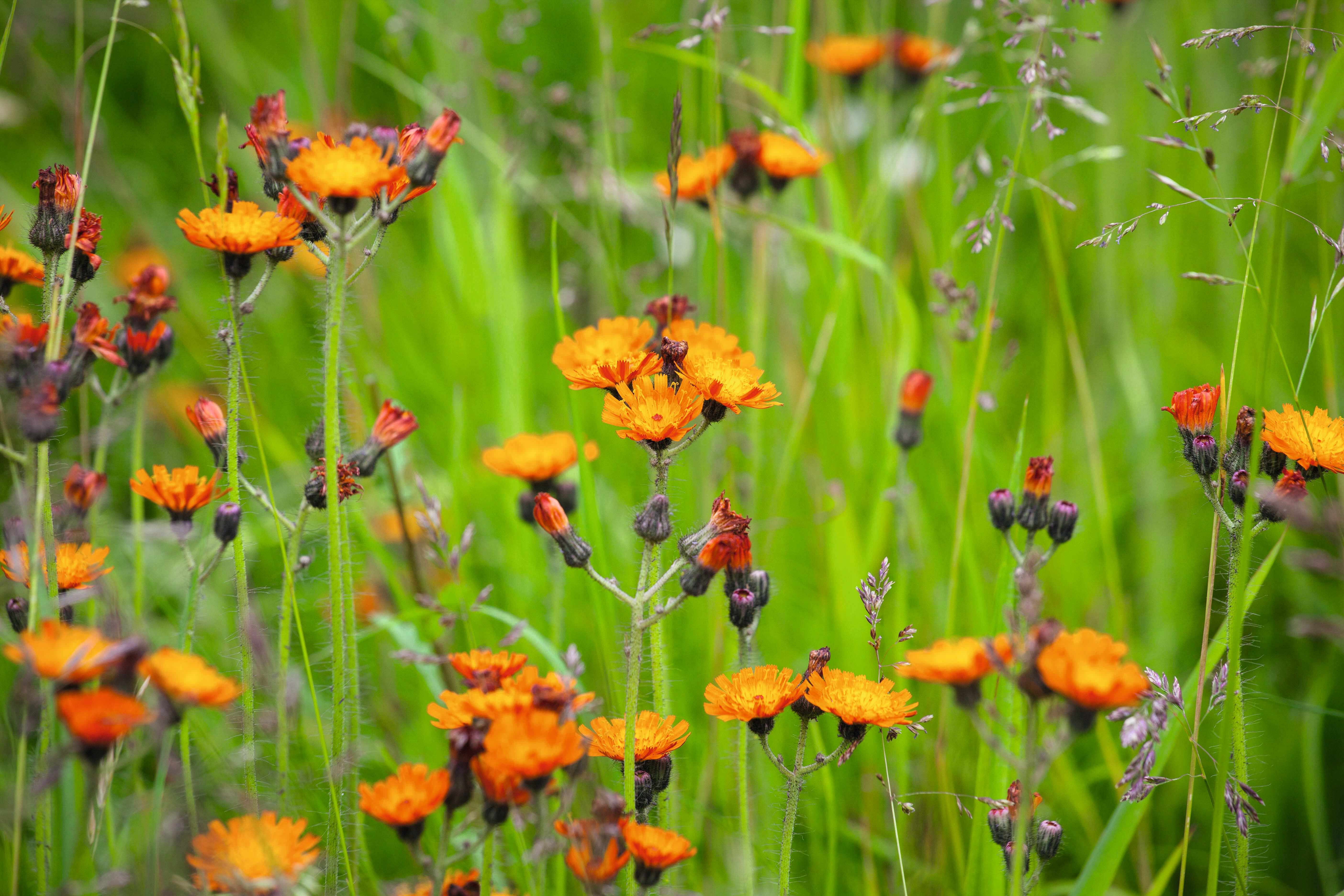 A close up of a colourful meadow
