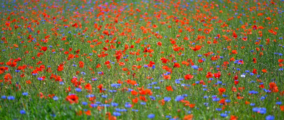 How To Create A Wildflower Meadow Gardens Illustrated