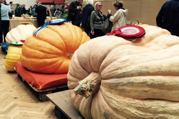 Giant pumpkins at RHS London Autumn Show. Photo: Juliet Roberts