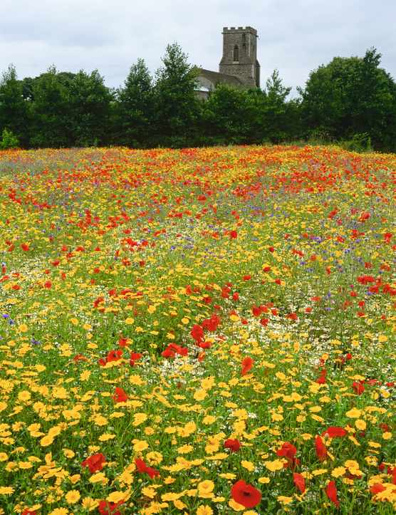 Colourful meadow