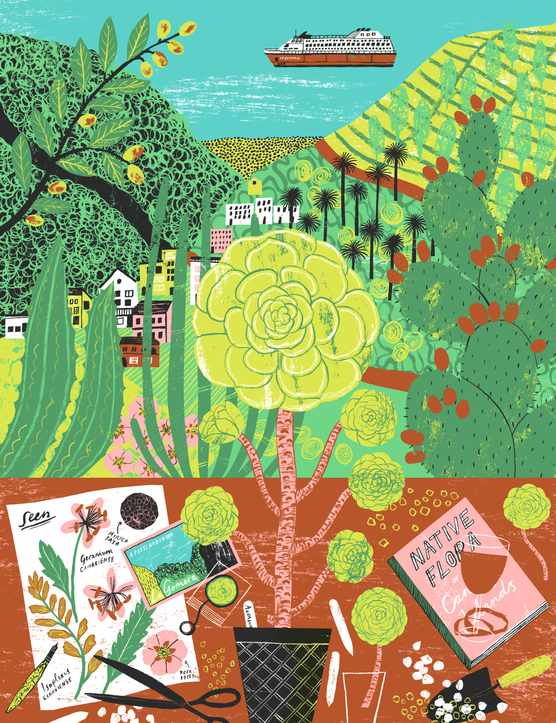 A plant illustration by Alice Pattullo