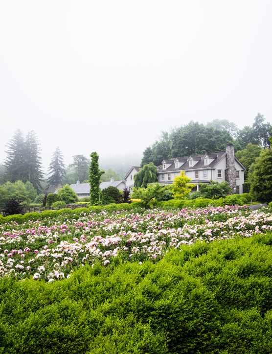 A photograph of a garden