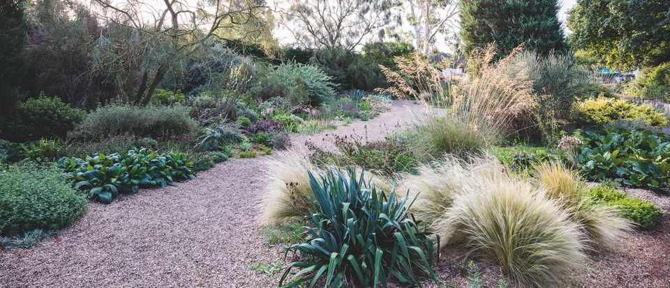 Beth Chatto Gardens. Photo: Claire Takacs