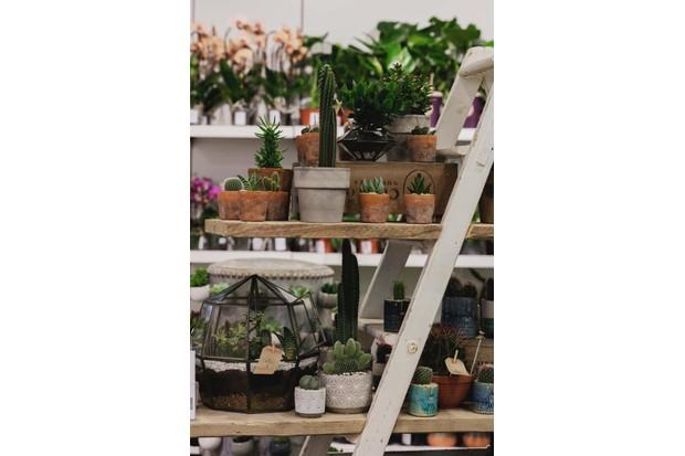 Clifton nurseries pop-up shop