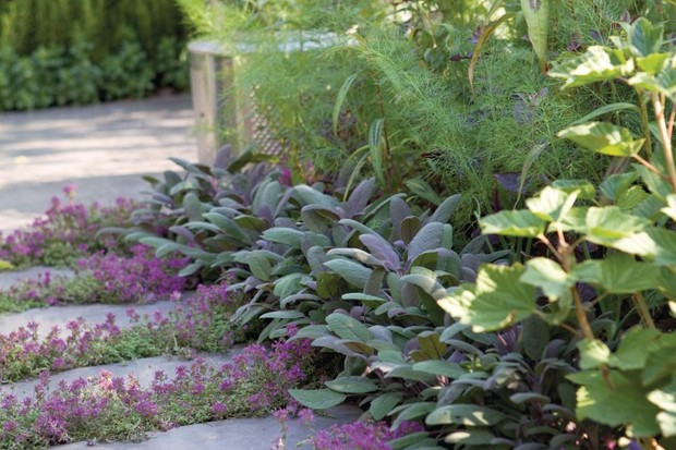 Paving interplanted with low growing perennials