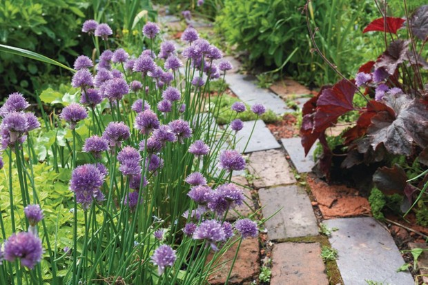 Brick pathway through a vegetable garden