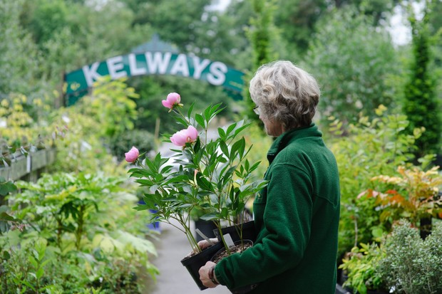 Kelways is the largest grower in the UK of peonies and iris. This member of staff holds Paeonia 'Bowl of Beauty'