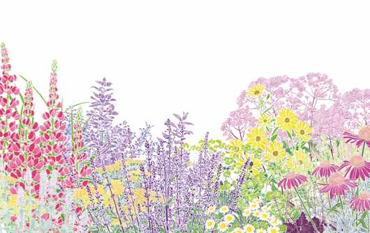Flowers and plant illustration bu Hannah McVicar
