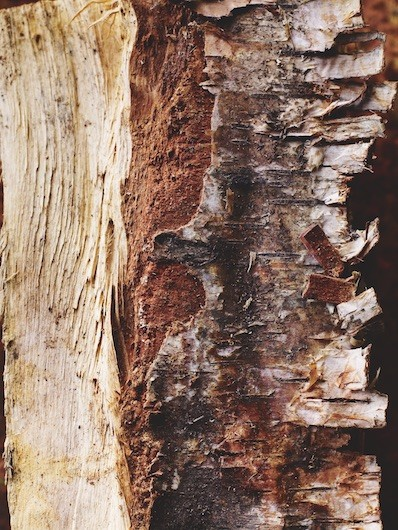 A photo of cherry wood