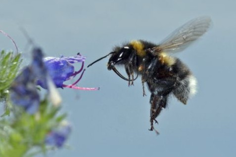 Celebrate World Bee Day