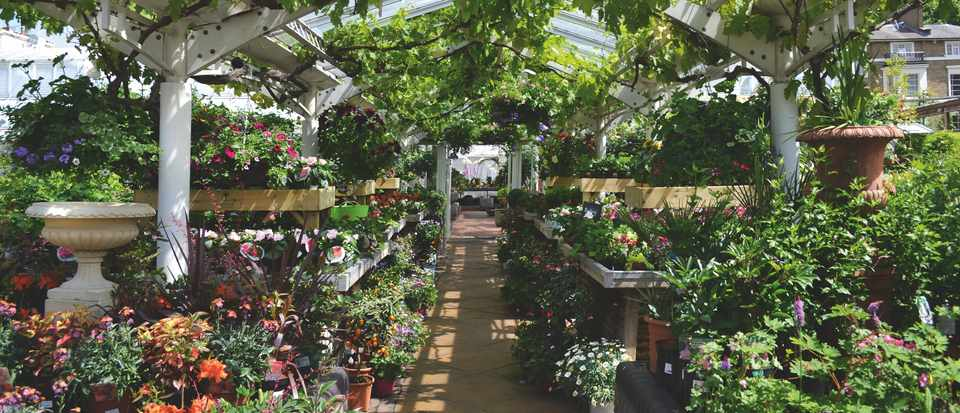 Clifton nurseries has two centres, one in London and one in Surrey. Gifts and furniture sit alongside their excellent range of plants.
